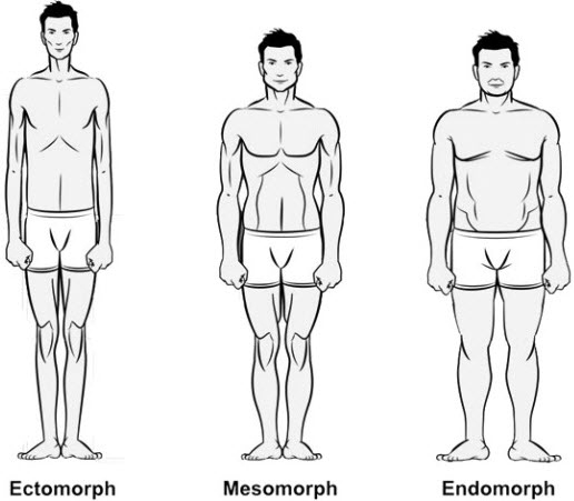 Workouts-Diet-Plans-for-Ectomorph-Mesomorph-and-Endomorph-Body-Types.jpg